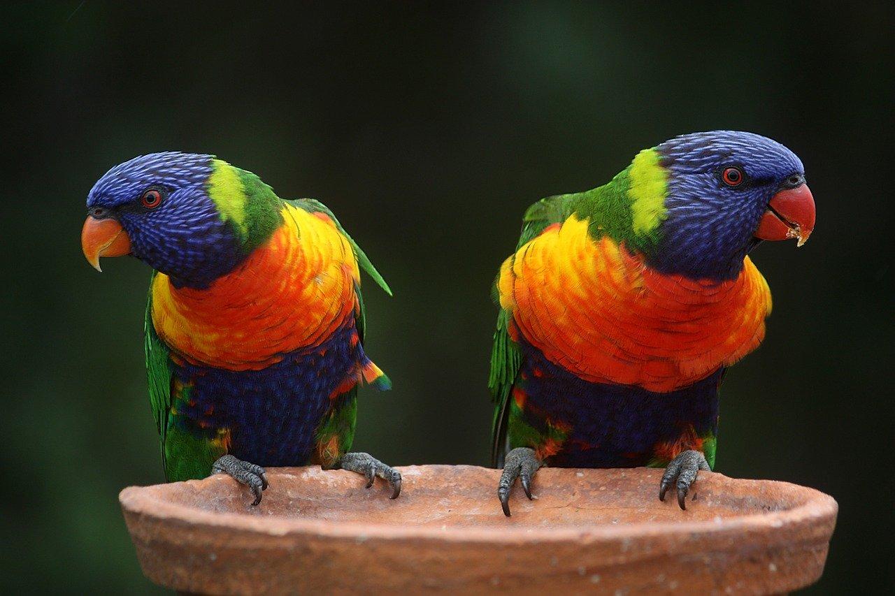 Colourful, Bird